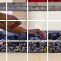 Viticulteurs & Vignerons